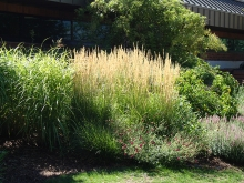 Grasses used in shrub border. Colorado Springs Utilities. Mesa Xeriscape Demonstration Garden