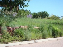 "Native grasses in ""prairiescape."" Colorado Springs Utilities. Mesa Xeriscape Demonstration Garden"