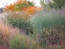 Grasses have great fall color and texture. Denver Botanic Garden