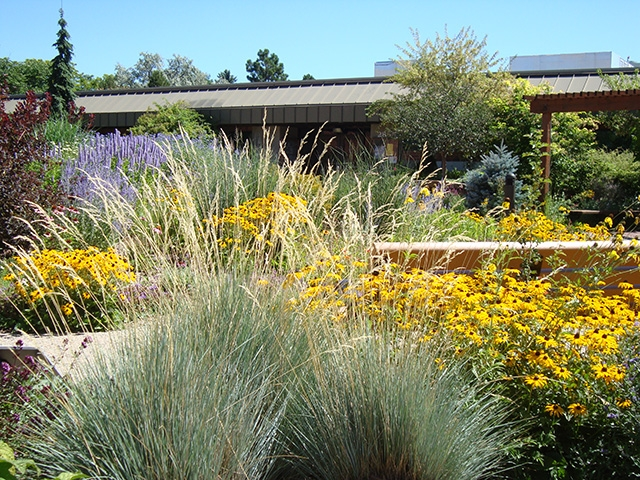 Ornamental Grasses Colorado Ornamental grasses southeastern colorado water conservancy district grasses in flower border colorado springs utilities mesa xeriscape demonstration garden workwithnaturefo